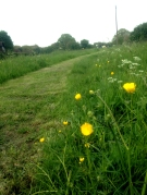Mown path through grass verge (Photo: Meadow Project)