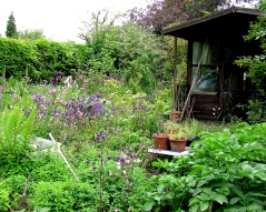Garden shed overlooking vegetable patch in the garden of Paul Mathews (Photo: Meadow Project)